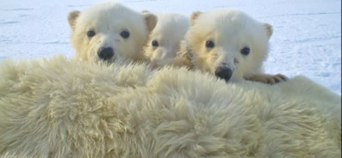 5 Important Facts About the Arctic Tundra | APECSEC.org