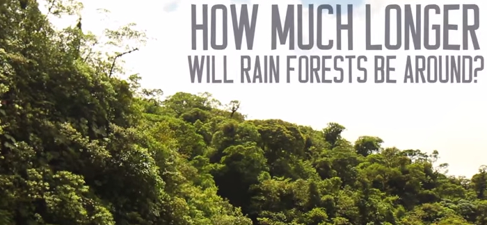 Fun Facts About The Tropical Rainforest
