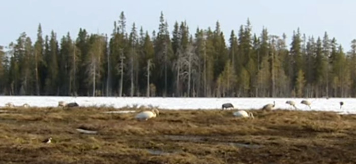 6 Important Facts About The Taiga