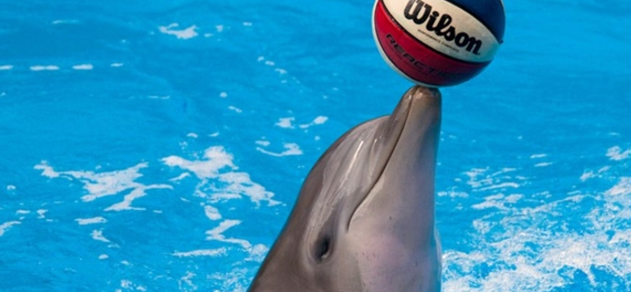 5 Important Facts About Bottlenose Dolphins