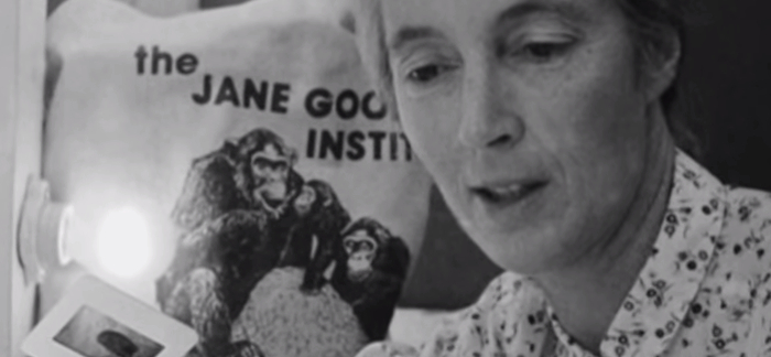 5 Important Facts About Jane Goodall