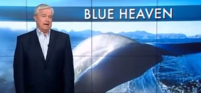 5 Interesting Facts About Blue Whales