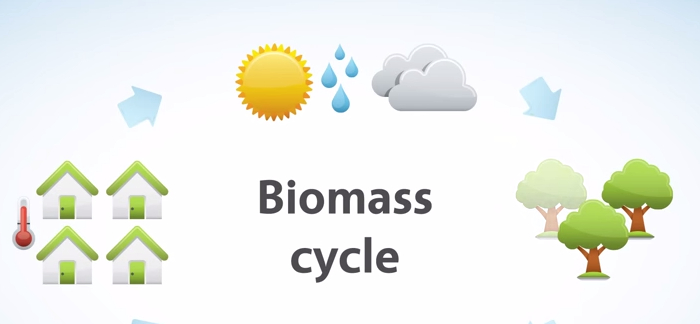 9 Important Facts About Biomass