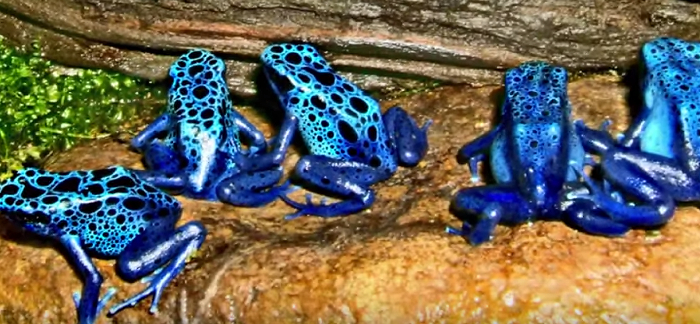 5 Important Facts About Poison Dart Frogs