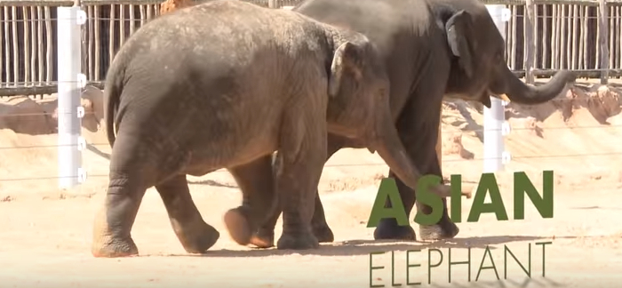5 Important Facts About Asian Elephants