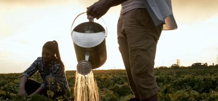 Advantages and Disadvantages of Organic Farming